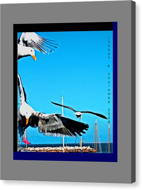 West Coast Sea Birds Canvas Print