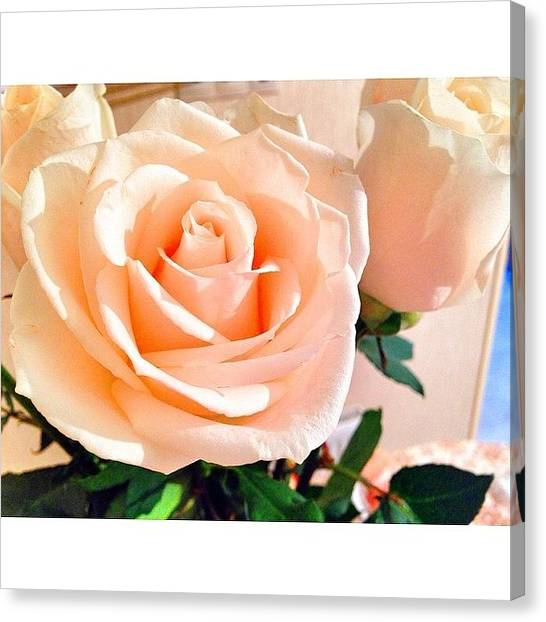 Red Roses Canvas Print - Red Roses by Yana Saybel
