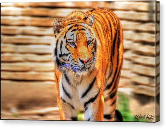 Siberian Cats Canvas Print - 001a Siberian Tiger by Michael Frank Jr