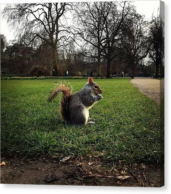 Squirrels Canvas Print - Давно я белочек не by Dmitri Danilov