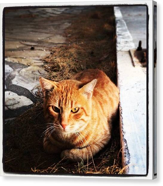 Greece Canvas Print - Perfect Animal... by Lefteris Sfyridis