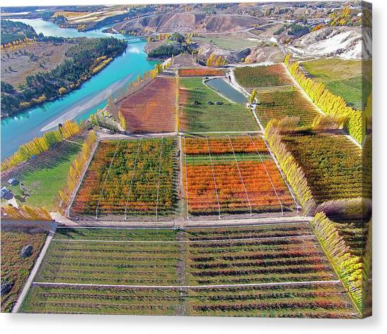 Aerial Over Autumn Orchards Canvas Print by David Wall
