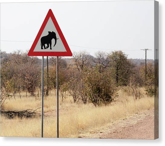 Caution Canvas Print - Africa, Namibia, Damaraland by Jaynes Gallery