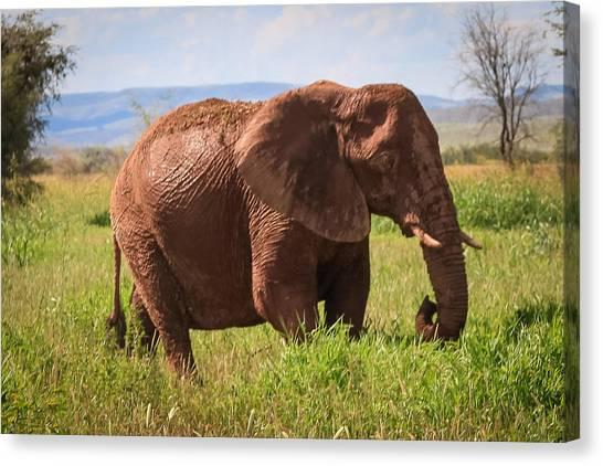 African Desert Elephant Canvas Print