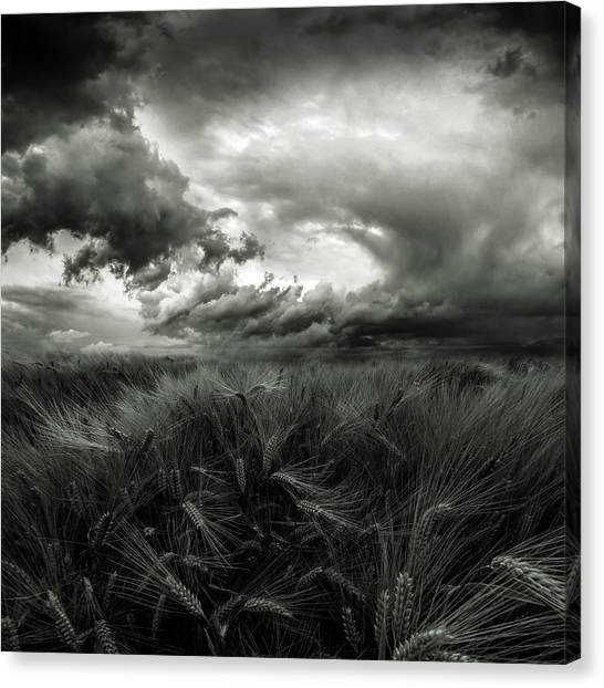 Harvest Canvas Print - After The Storm by Franziskus Pfleghart