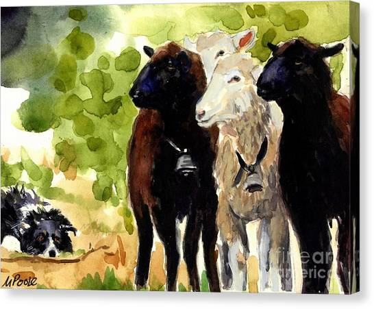 Border Collies Canvas Print - All Eyes by Molly Poole