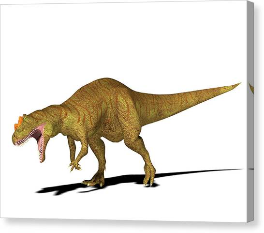 Allosaurus Dinosaur Canvas Print by Friedrich Saurer