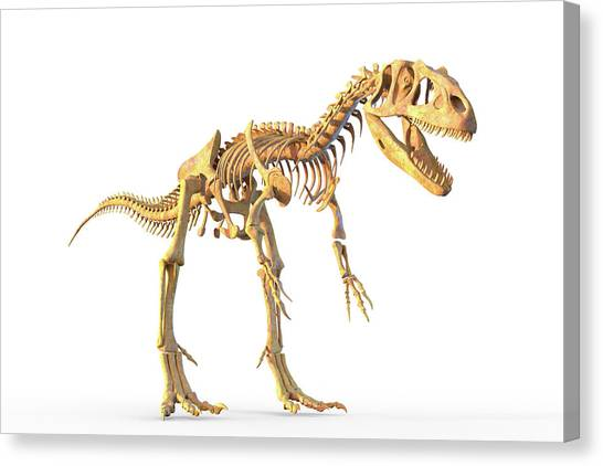 Allosaurus Skeleton Canvas Print by Roger Harris/science Photo Library