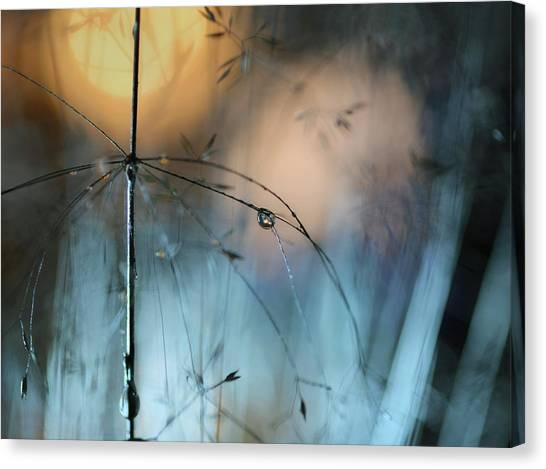 Drops Canvas Print - Almost Dark by Heidi Westum