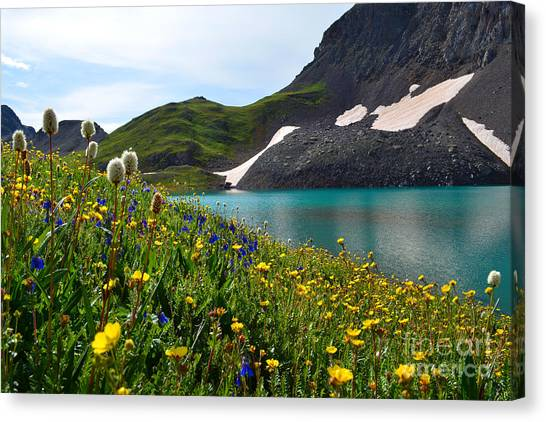 Alpine Flowers Canvas Print