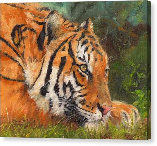 Siberian Canvas Print - Amur Tiger by David Stribbling