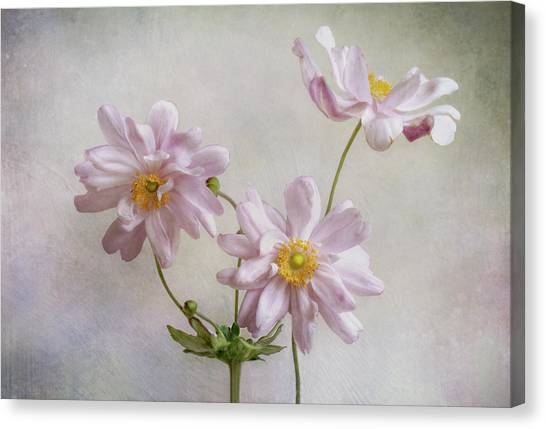 Japanese Gardens Canvas Print - Anemones by Mandy Disher