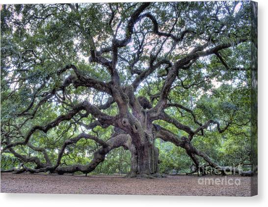 Trees Canvas Print - Angel Oak by Dustin K Ryan