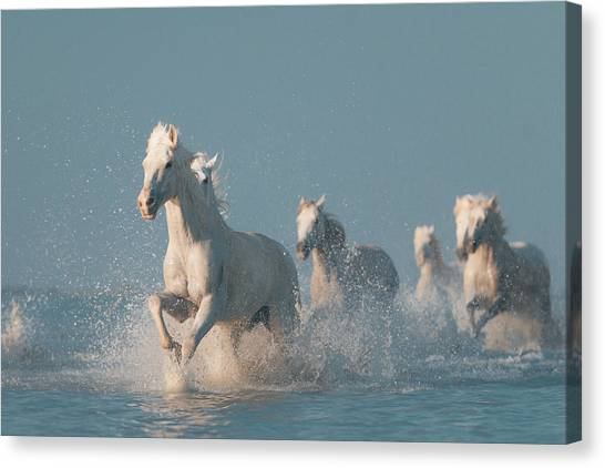 Energy Canvas Print - Angels Of Camargue by Rostovskiy Anton
