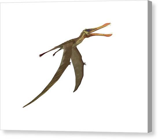 Pterodactyls Canvas Print - Anhanguera Pterosaur by Friedrich Saurer