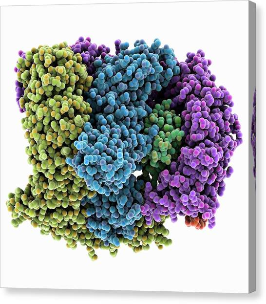 Biochemical Canvas Print - Ap2 Clathrin Adapter Complex by Laguna Design/science Photo Library