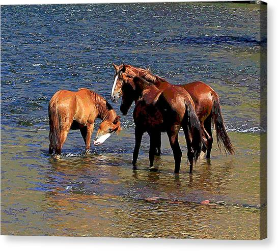 Arizona Wild Horses On The Salt River Canvas Print