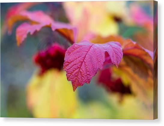 Arrowwood Leaf - Featured 3 Canvas Print