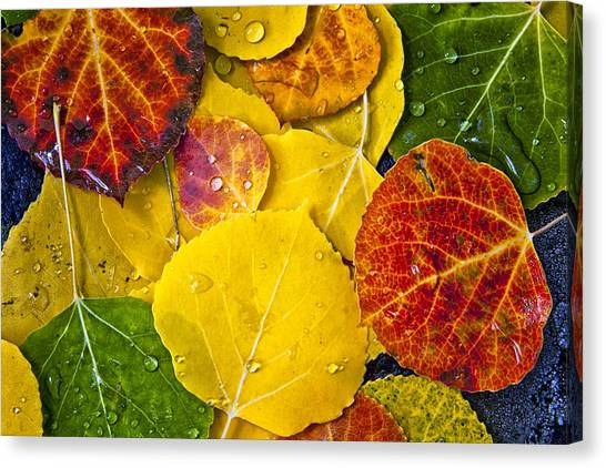 Aspen Rainbow Canvas Print