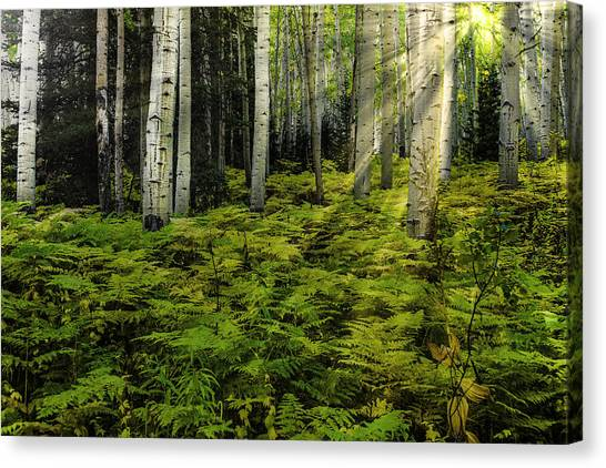 Aspen Sunrise Canvas Print