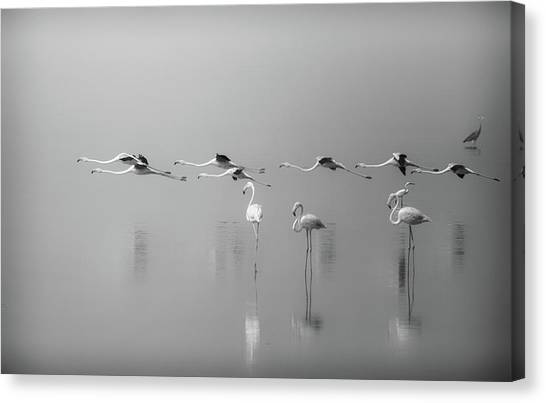 Formation Canvas Print - At A Glance by Ahmed Thabet