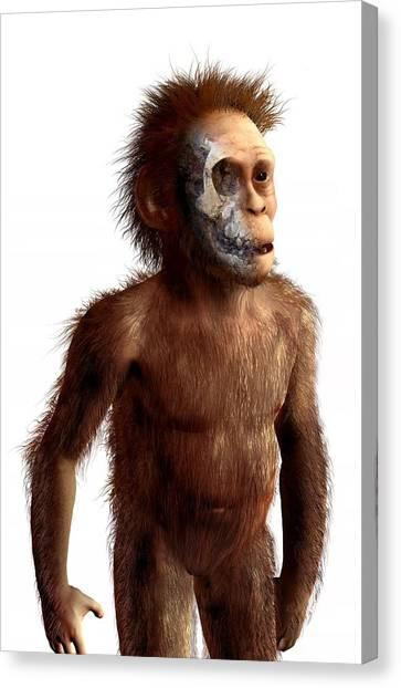 Ethiopian Woman Canvas Print - Australopithecus Afarensis, Artwork by Science Photo Library