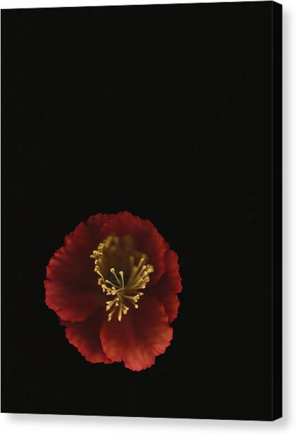 Autographic Poppy - Color Canvas Print
