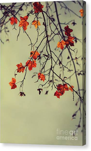 Fall Canvas Print - Autumn by Diana Kraleva