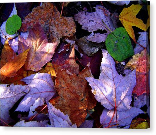 Autumn Groundcover Canvas Print