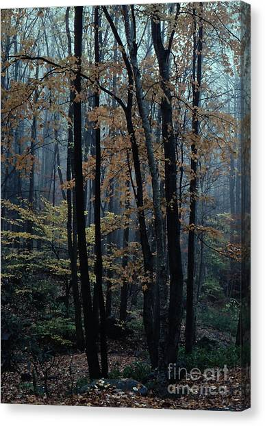 Autumn In The Forest Canvas Print by Adeline Byford