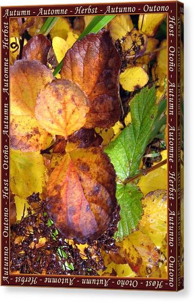 Autumn Leaves 2 Canvas Print