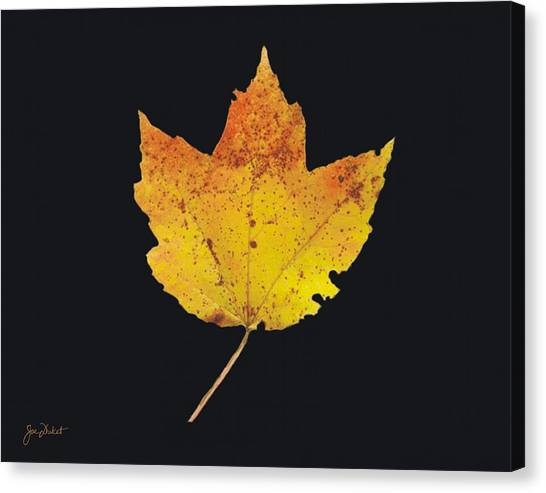 Autumn Mountain Maple Leaf Canvas Print