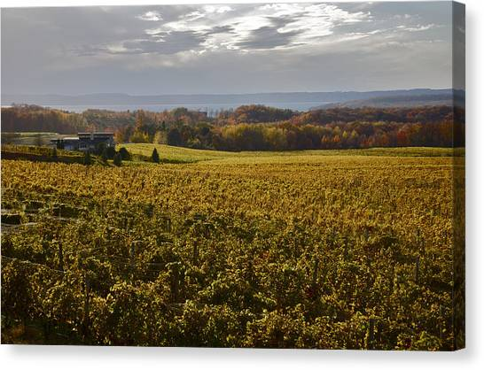 Autumn On Old Mission Peninsula  Canvas Print