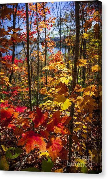 Algonquin Park Canvas Print - Autumn Splendor by Elena Elisseeva