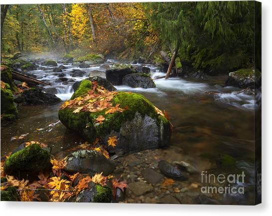 Maple Season Canvas Print - Autumn Stream by Mike Dawson