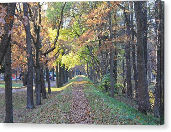 Canvas Print - A Walk Under The Trees by Christine Rivers