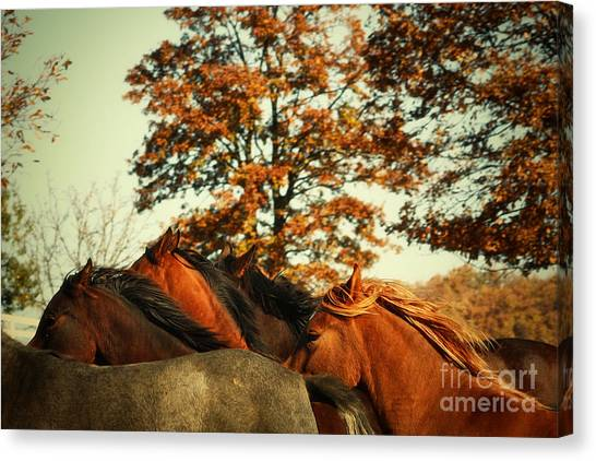 Autumn Wild Horses Canvas Print
