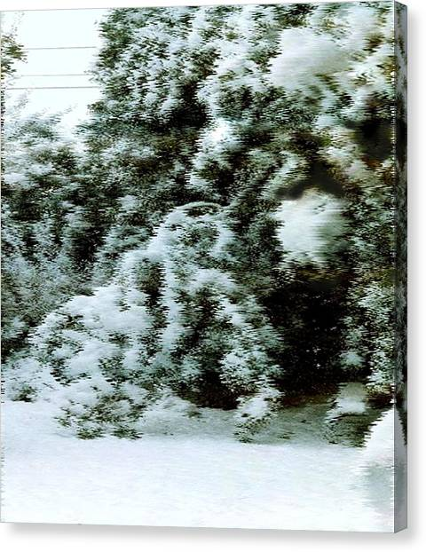 Backyard Snow Canvas Print by Elaine Williams