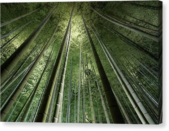Bamboo Canvas Print - Bamboo Night by Takeshi Marumoto