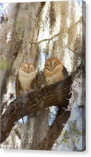 Large Birds Canvas Print - Barn Owls by Marcela Martinez