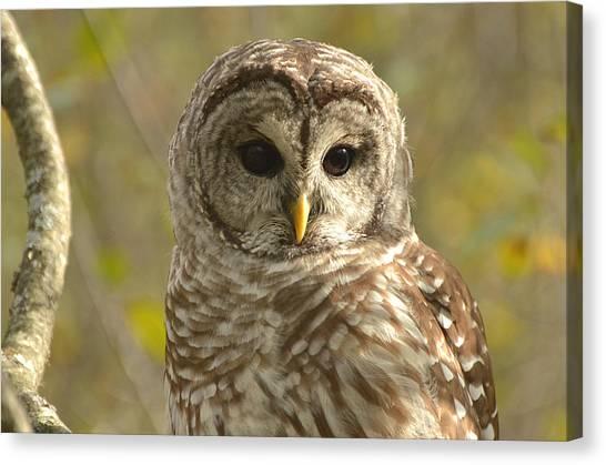 Barred Owl Canvas Print by Nancy Landry