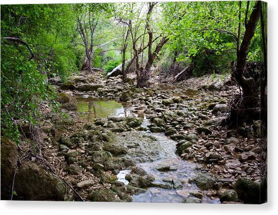 Austin Texas Canvas Print - Barton Creek Greenbelt by Mark Weaver