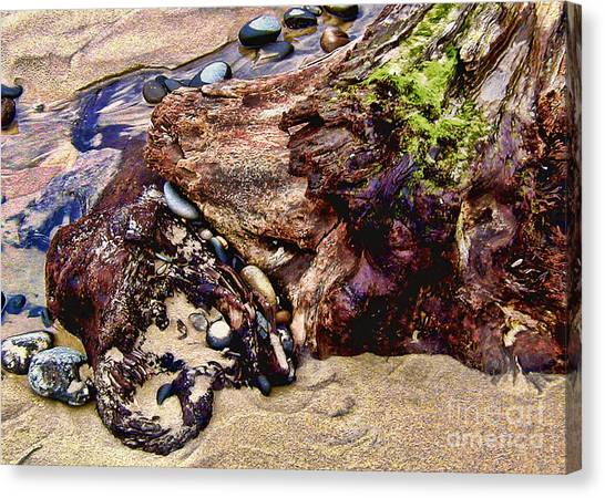 Beach Stump And Stones Canvas Print by Joseph Vittek