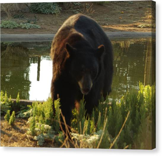 Bear 1 Canvas Print