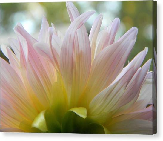 Flower Canvas Print - Beauty From Behind  by Tammy Garner
