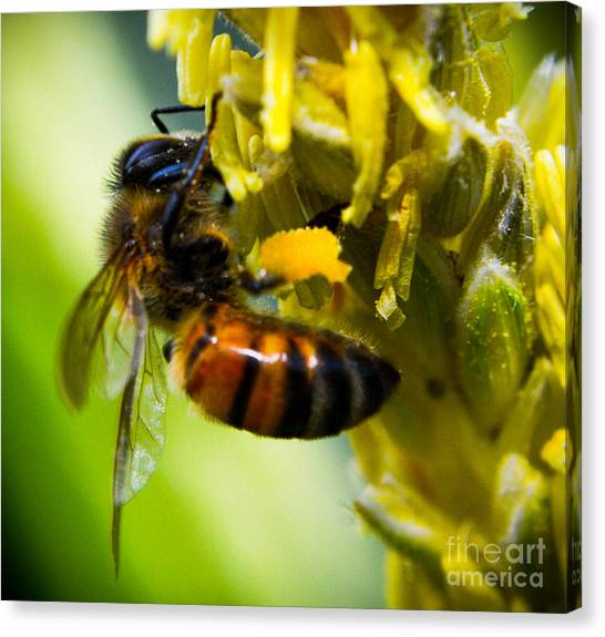 bee Canvas Print by Kenroy Rhoden