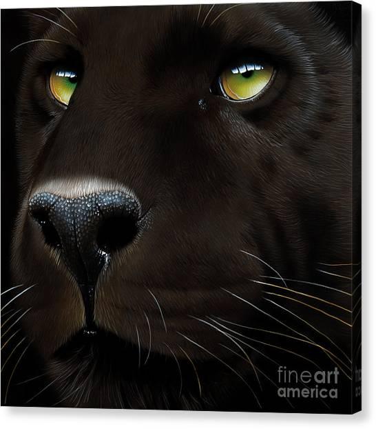 Panthers Canvas Print - Black Leopard by Jurek Zamoyski