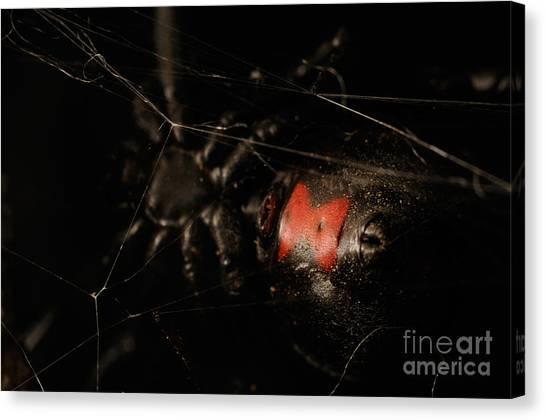 Black Widow Canvas Print - Black Widow Spider by Scott Linstead