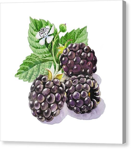 Blackberries Canvas Print - Artz Vitamins Series The Blackberries by Irina Sztukowski