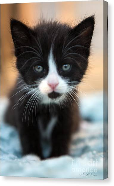 Kittens Canvas Print - Black And White Kitten by Iris Richardson